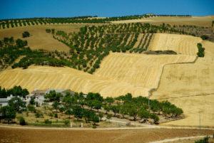 Andalucía – Visita a proveedores
